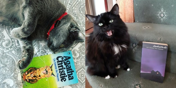 Cats with Christie: A Puzzle